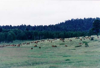 Private land cow elk hunts