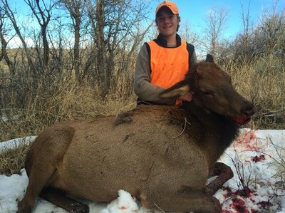 Successful rifle season cow elk hunt on private land.