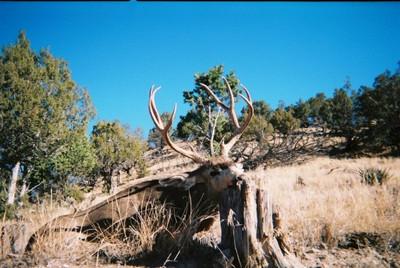 Low cost mule deer drop camp