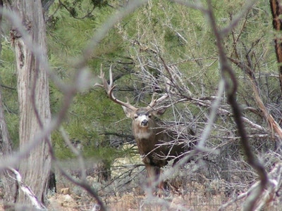 Mule Deer buck has you pegged.