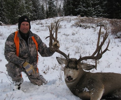 Trophy mule deer in WY.