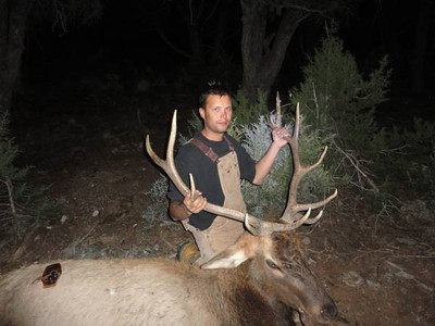 New Mexico bull elk hunts.