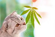 Pet Health and CBD