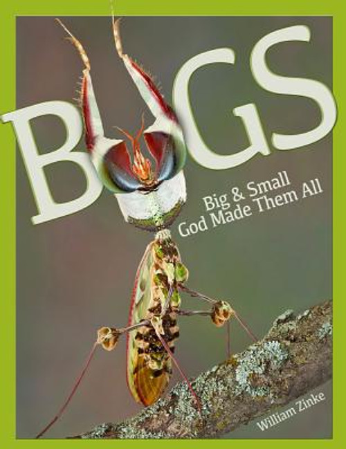 Bugs Big & Small: God Made Them All