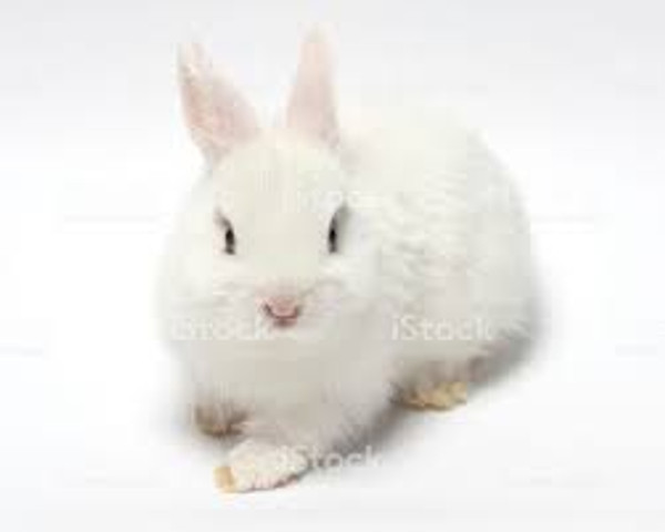 Rabbit - Whole with Fur small