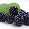 Blackberry -TFA Gallon