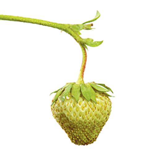 Strawberry Green-FA-Gallon