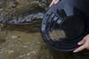 deep riffle black gold pan