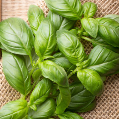 Basil Dark Balsamic