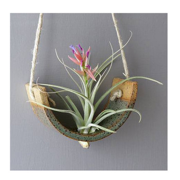 Green Air Plant Cradle