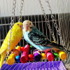 Value buy 6pc combo bird toys, swing, ring, bell + chew toys
