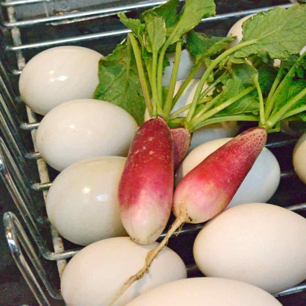 French Breakfast Radishes with fresh duck eggs- (Raphanus sativus)
