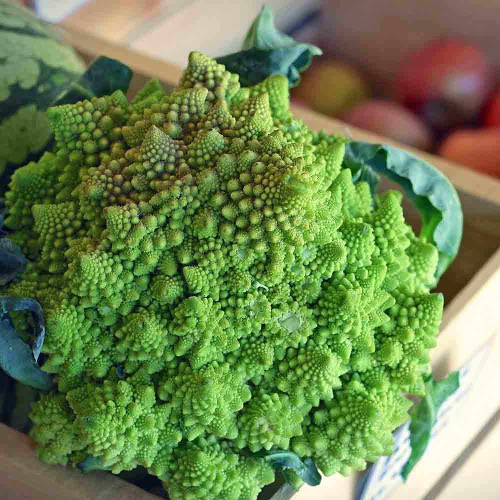 Romanesco Broccoli - (Brassica oleracea)