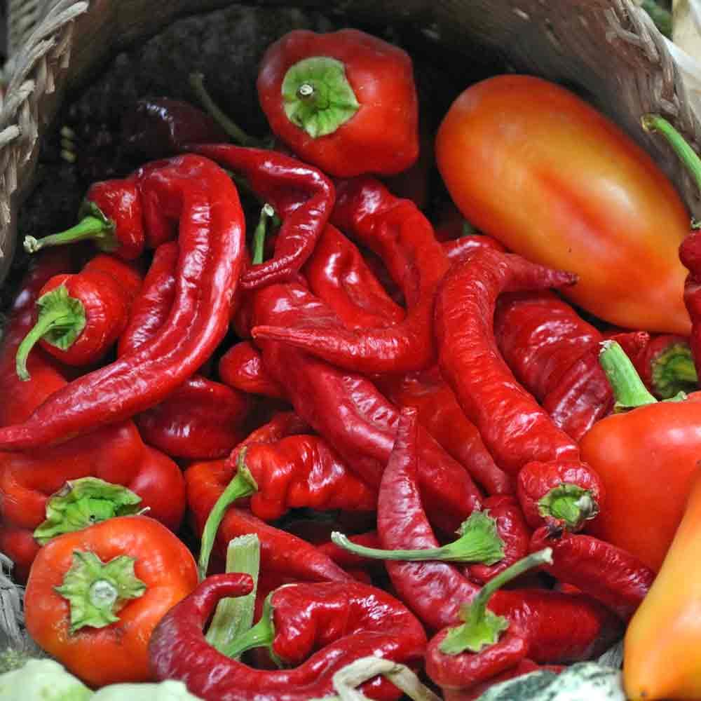 Jimmy Nardello Sweet Pepper - (Capsicum annuum)
