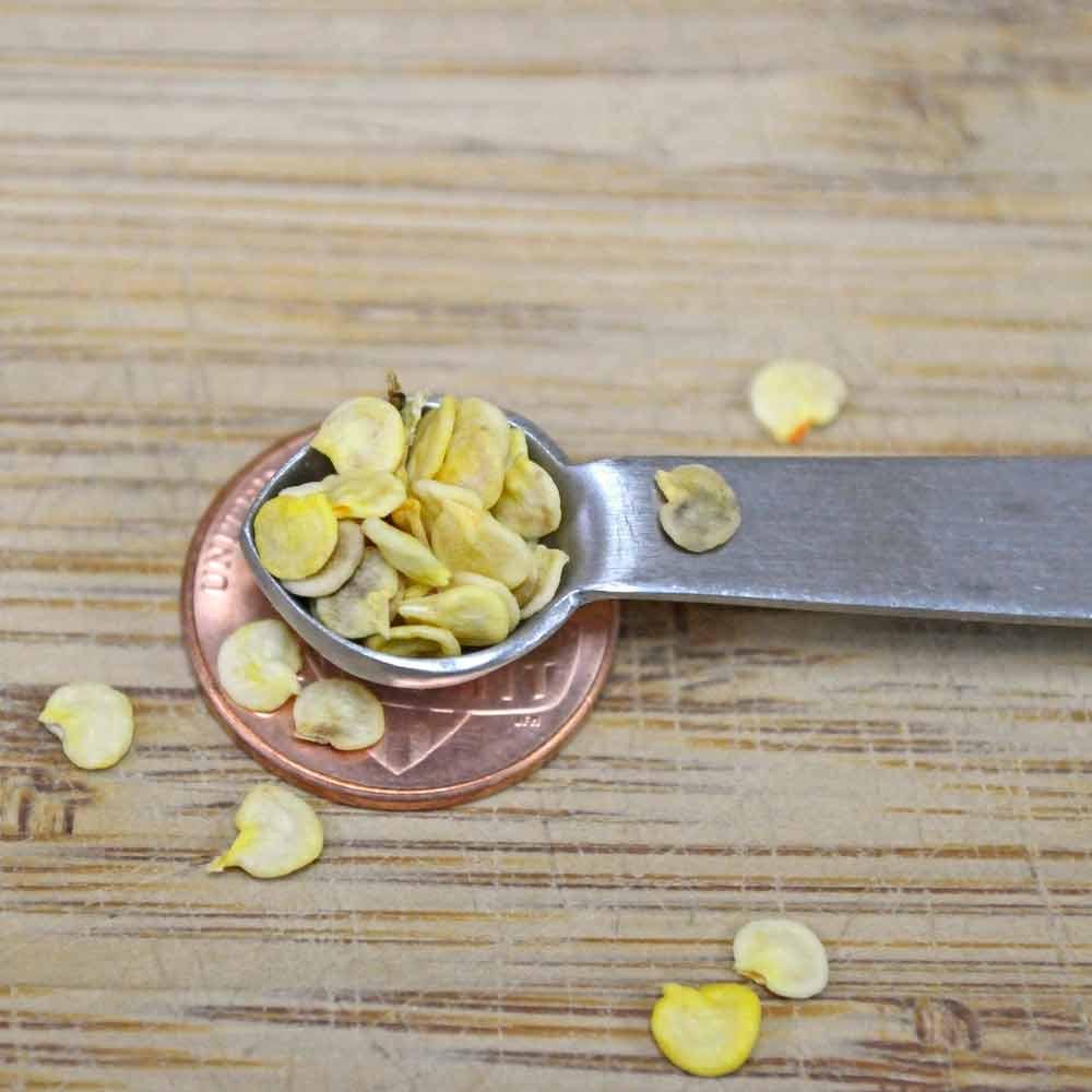 Chilhuacle Rojo Heirloom Pepper Seeds - (Capsicum Annuum)