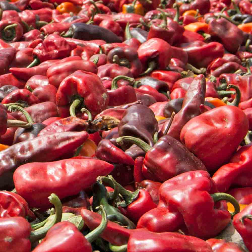 Chilhuacle Rojo Peppers - (Capsicum Annuum)