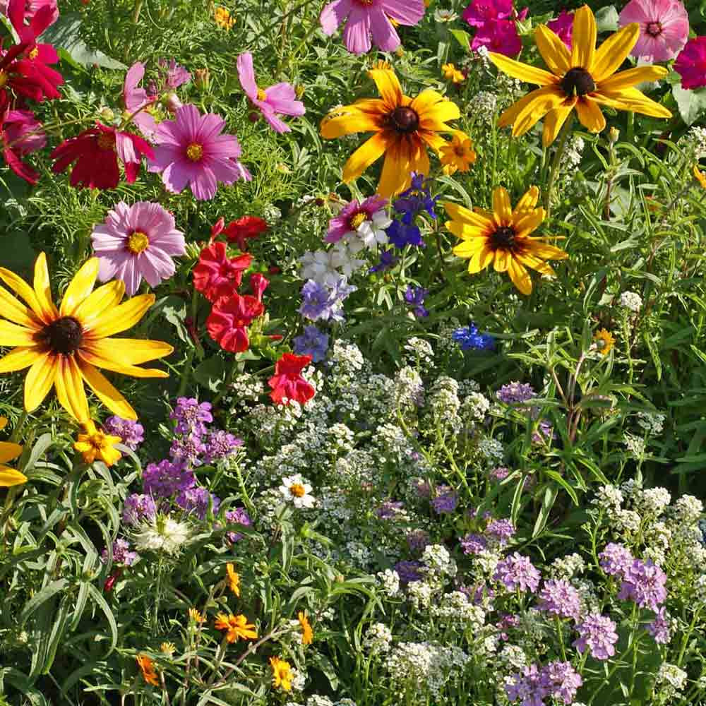 Cottage Garden Flower Seed Mix