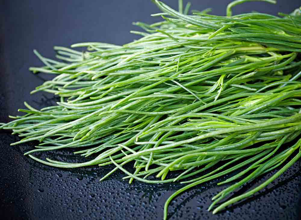 Fresh Agretti  - (Salsola soda)