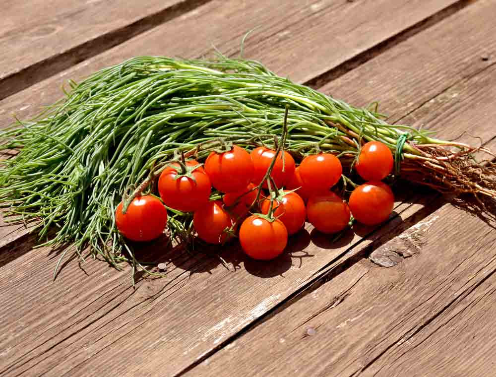 Fresh Agretti with cherry tomatoes - (Salsola soda)