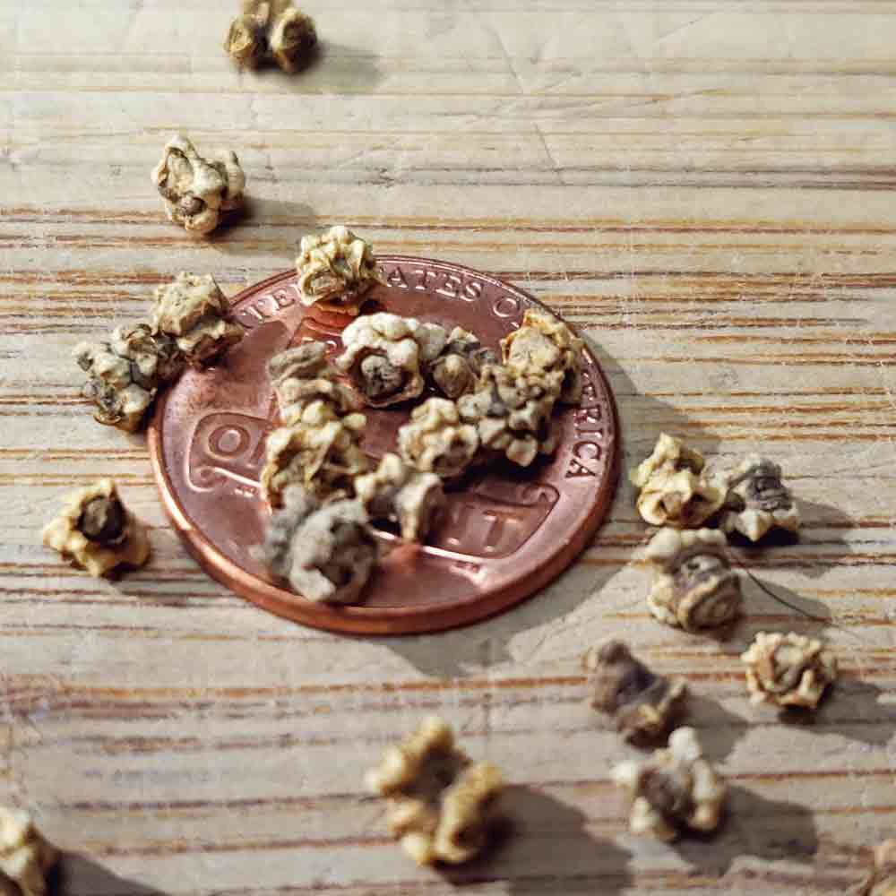 Rainbow Beet Mix Heirloom Seeds - (Beta vulgaris)