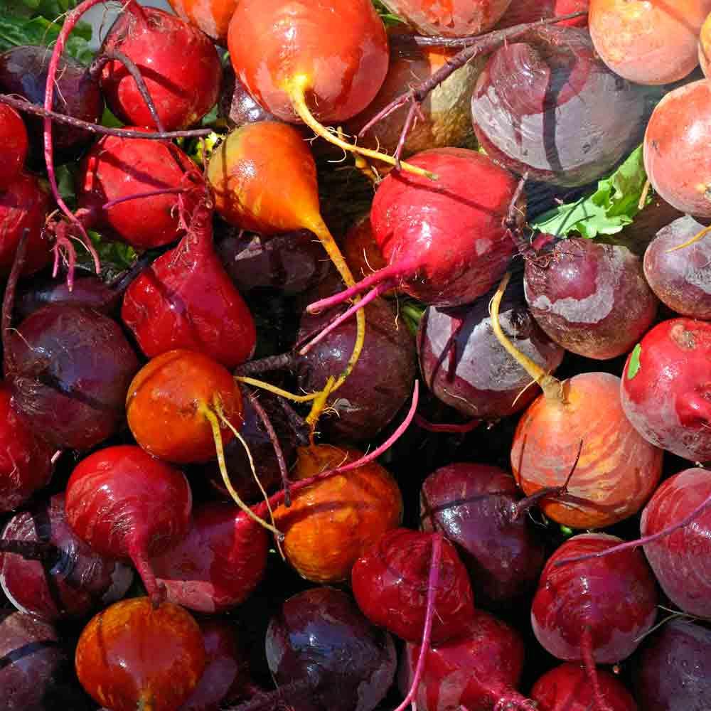 Rainbow Mix Beets - (Beta vulgaris)