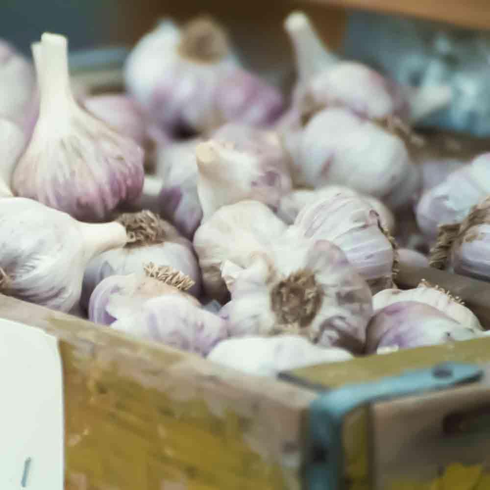 Killarney Red Garlic Bulbs - (Allium sativum)