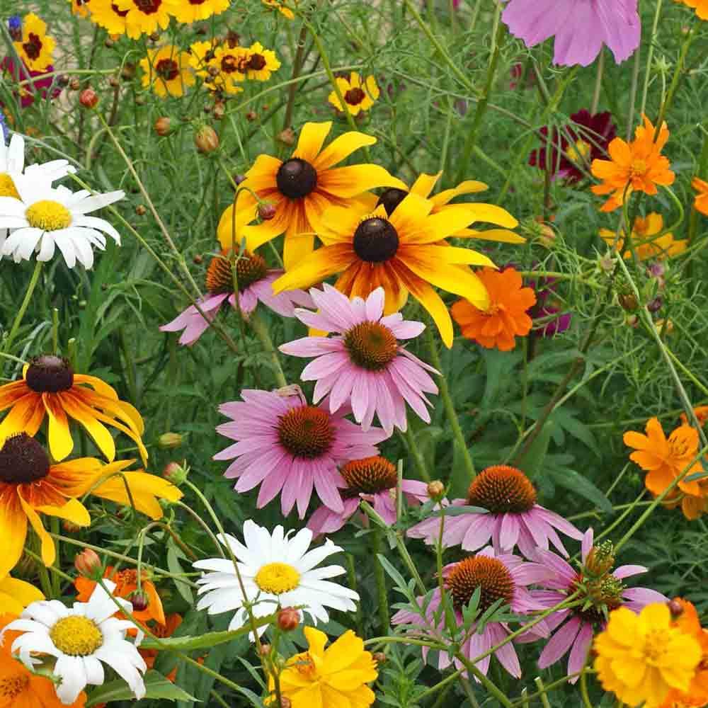 Terroir Seeds Cut Flower Seed Mix