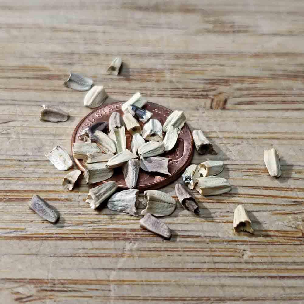 Tennessee Coneflower Heirloom Seeds - (Echinacea tennesseensis)