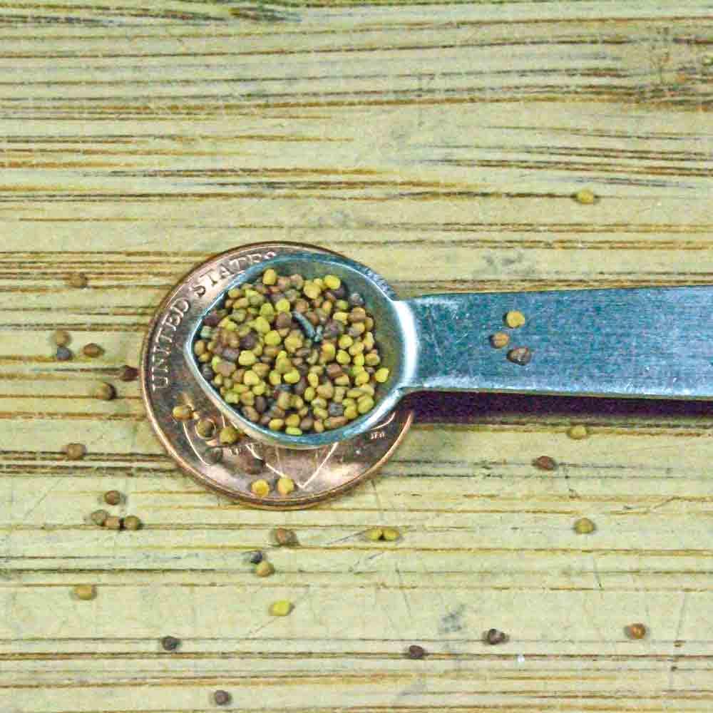 Four Leaf Clover /Legendary Good Luck Flower Seeds - (Trifolium repens)