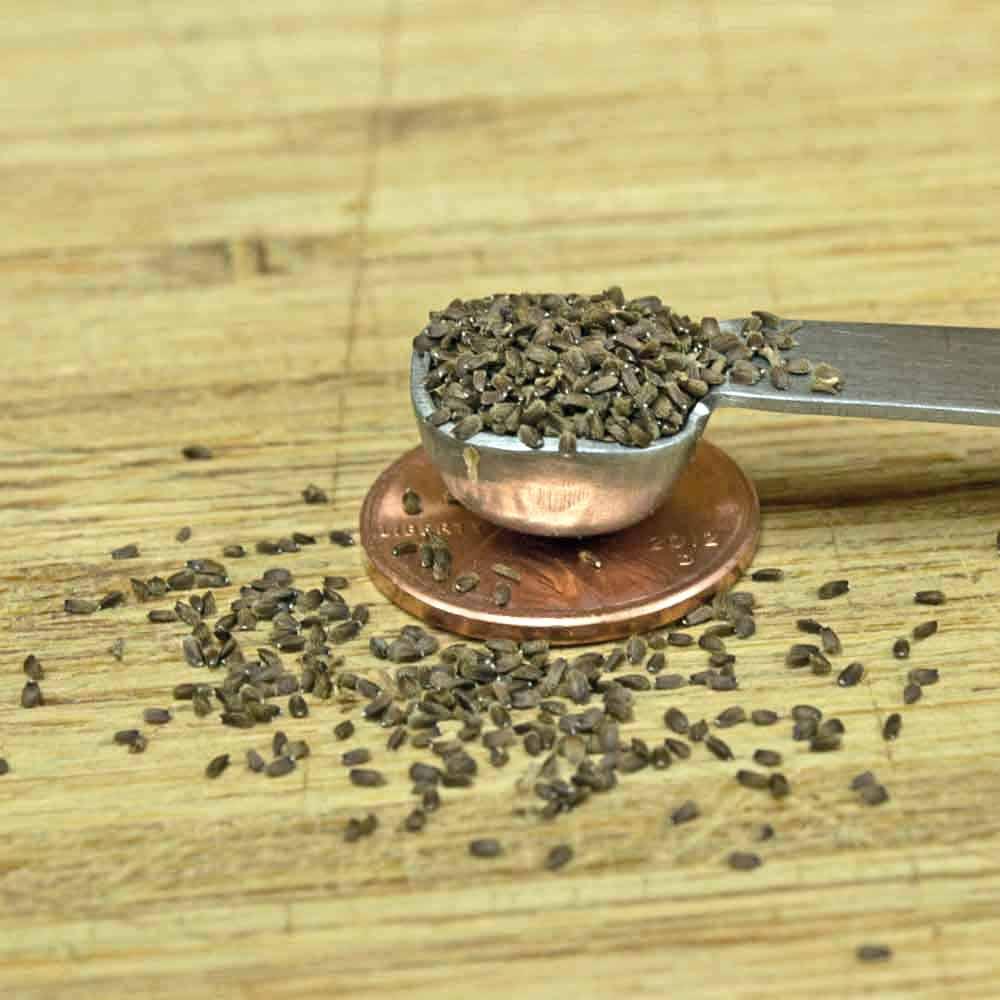 Anise Hyssop Seeds - (Agastache foeniculum)
