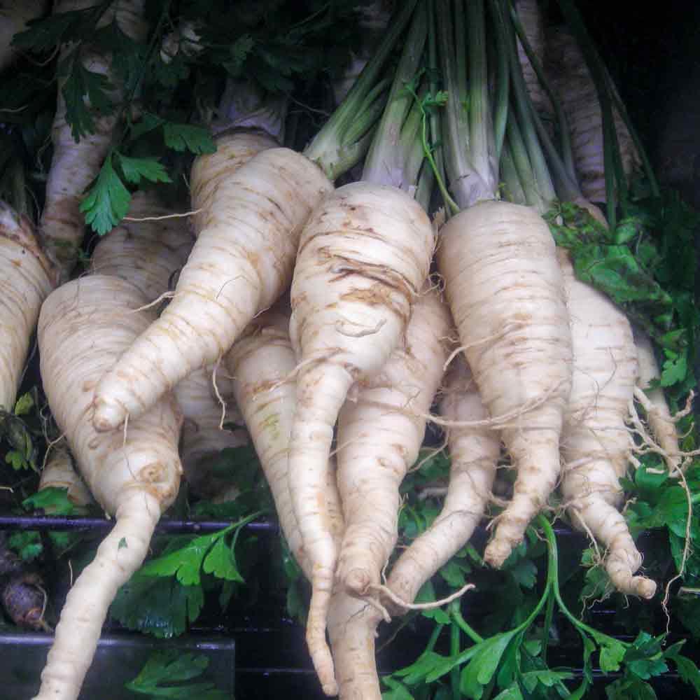 Hamburg Root Parsley at Market - (Petroselinum crispum var. tuberosum)