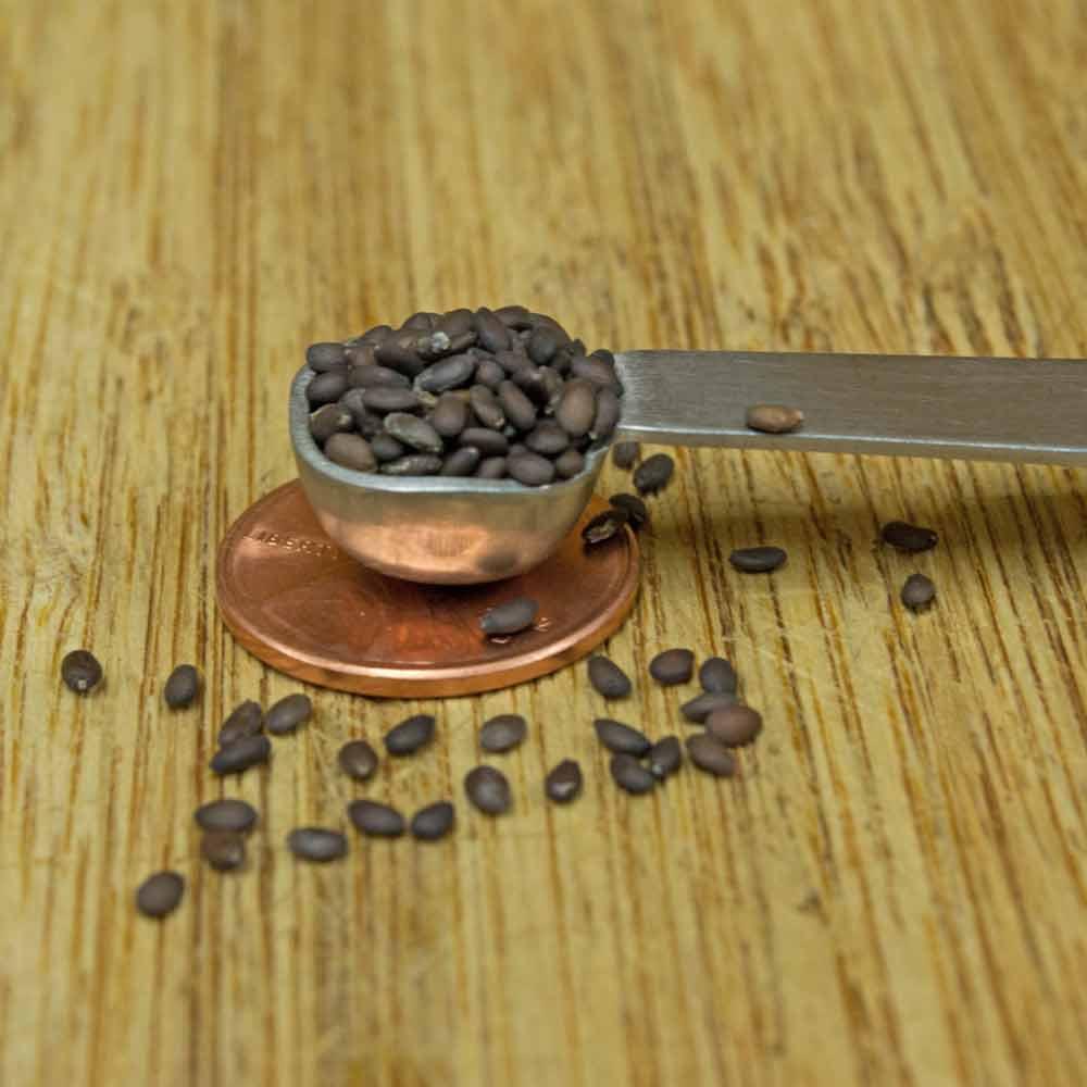 Clary Sage Seeds - (Salvia sclarea)