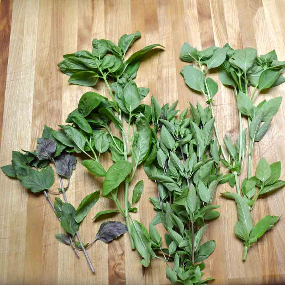 Basil Mix leaves - (Ocimum basilicum)