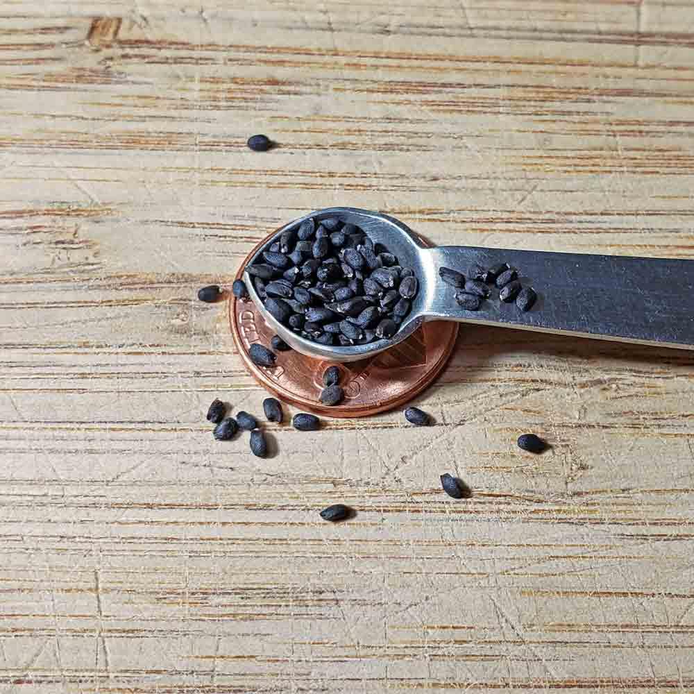 Sweet Basil Seeds - (Ocimum basilicum)