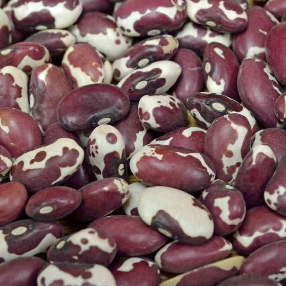 Anasazi Bush Bean Seeds - (Phaseolus vulgaris)