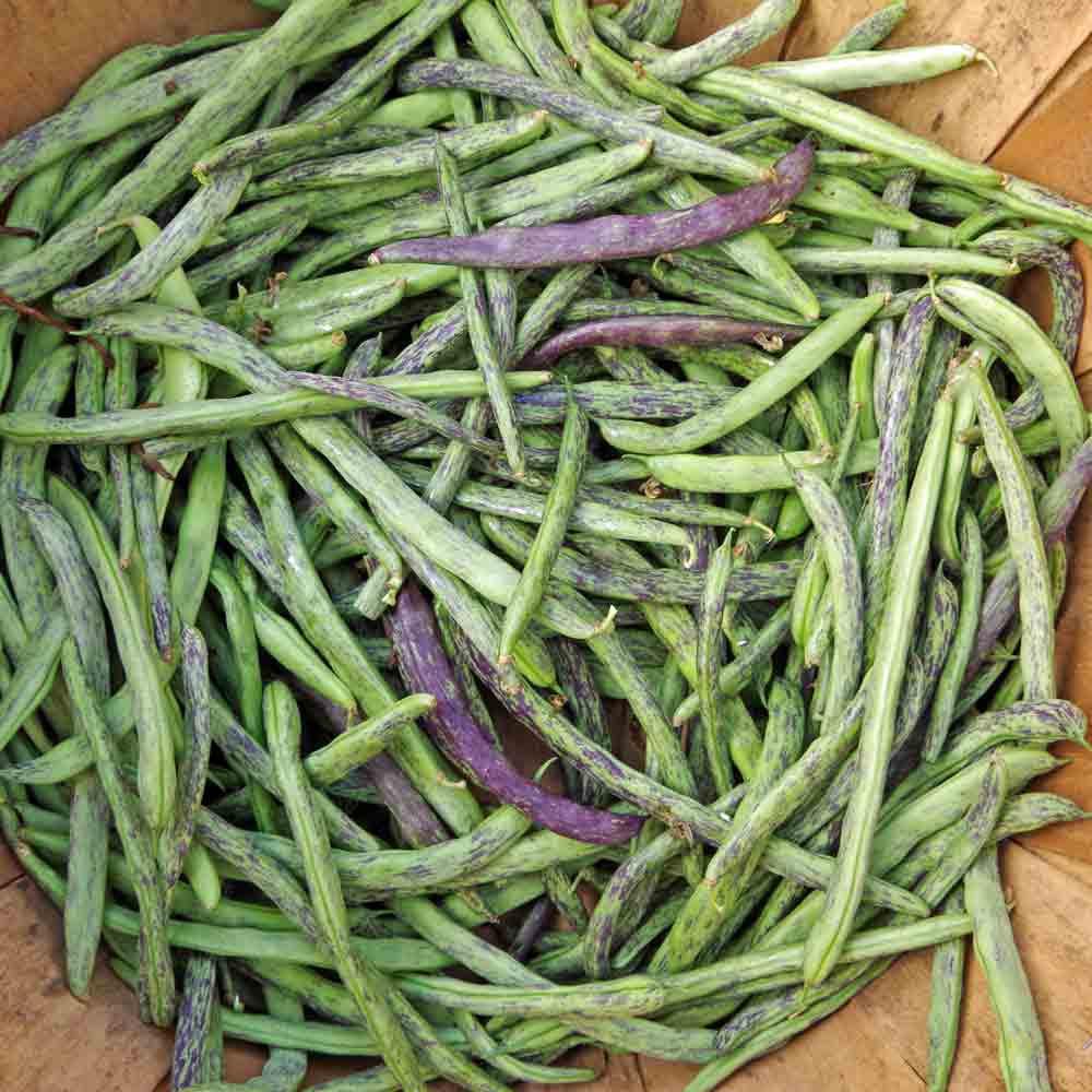 Dragon's Tongue Wax Bush Bean/Langerie Wax - (Phaseolus vulgaris)