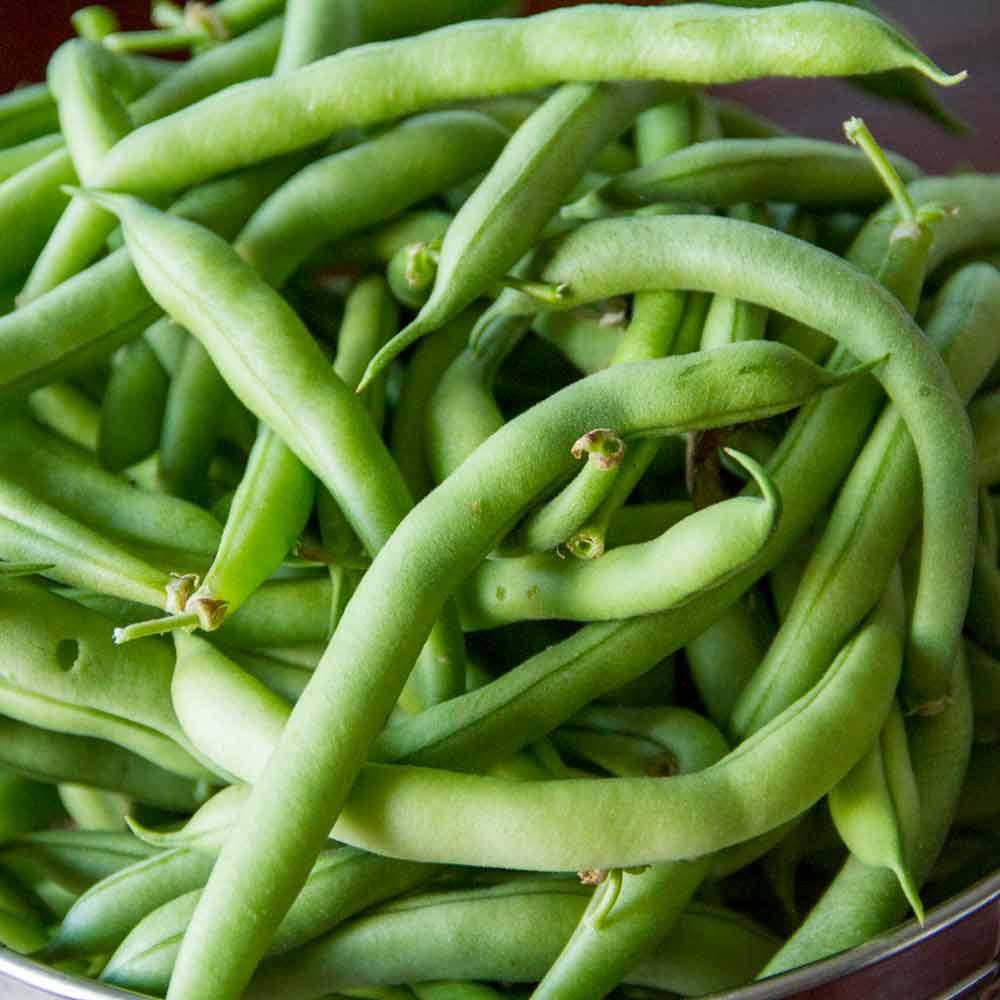 Freshly Harvested Tendergreen Bush Beans - (Phaseolus vulgaris)