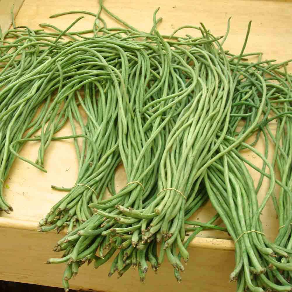 Asparagus Green Podded Bean - (Vigna unguiculata)