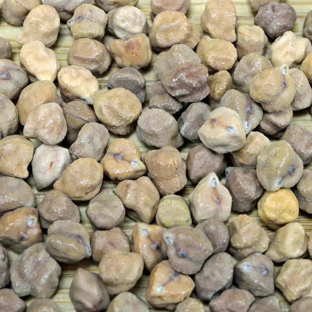 Kala Chana Garbanzo/Chickpea Seeds - (Cicer arietinum)