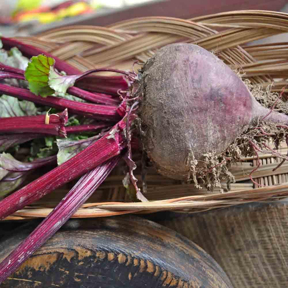 Fresh picked Bull's Blood Beet  - (Beta vulgaris)