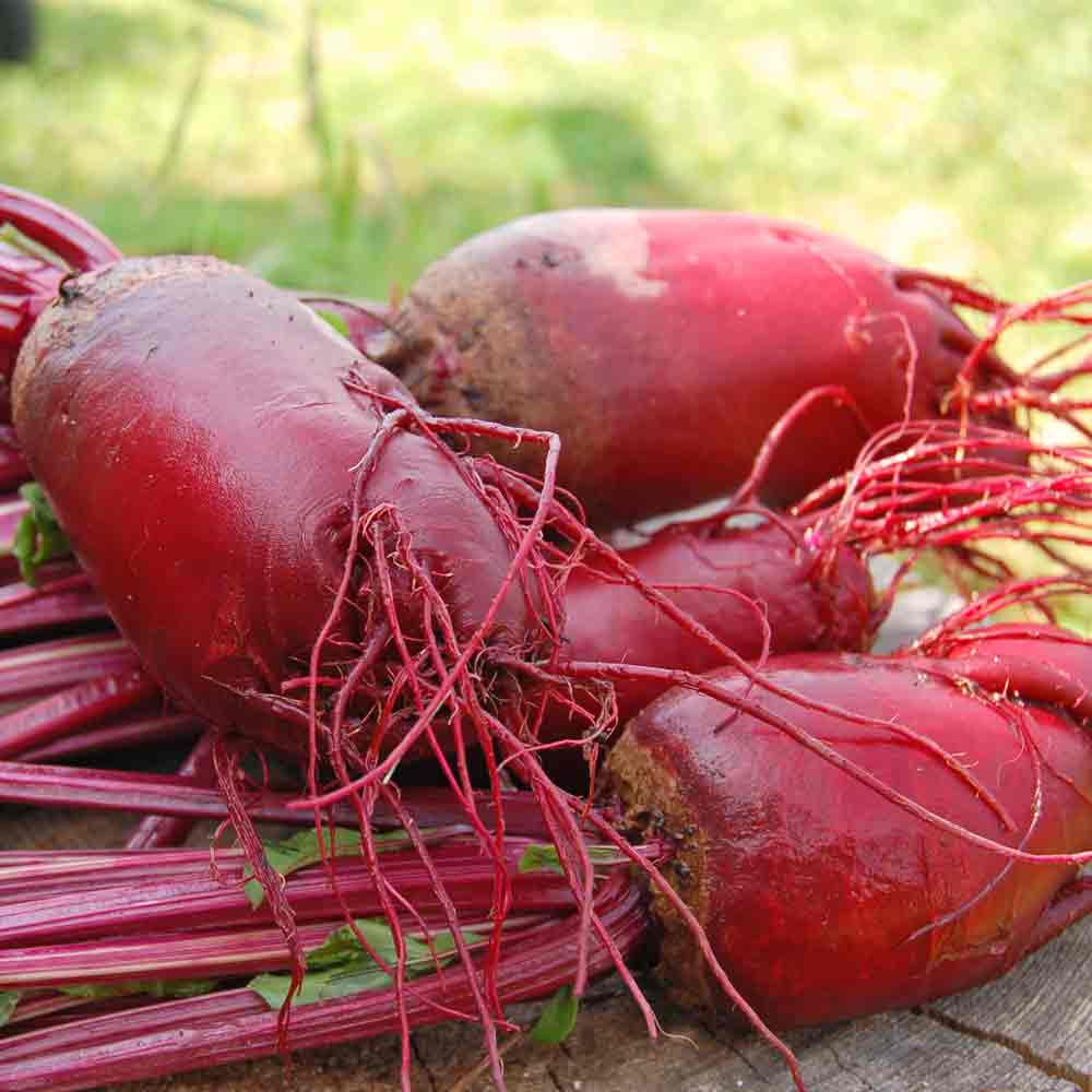 Vegetable Beetroot 500 Seeds Cylindra