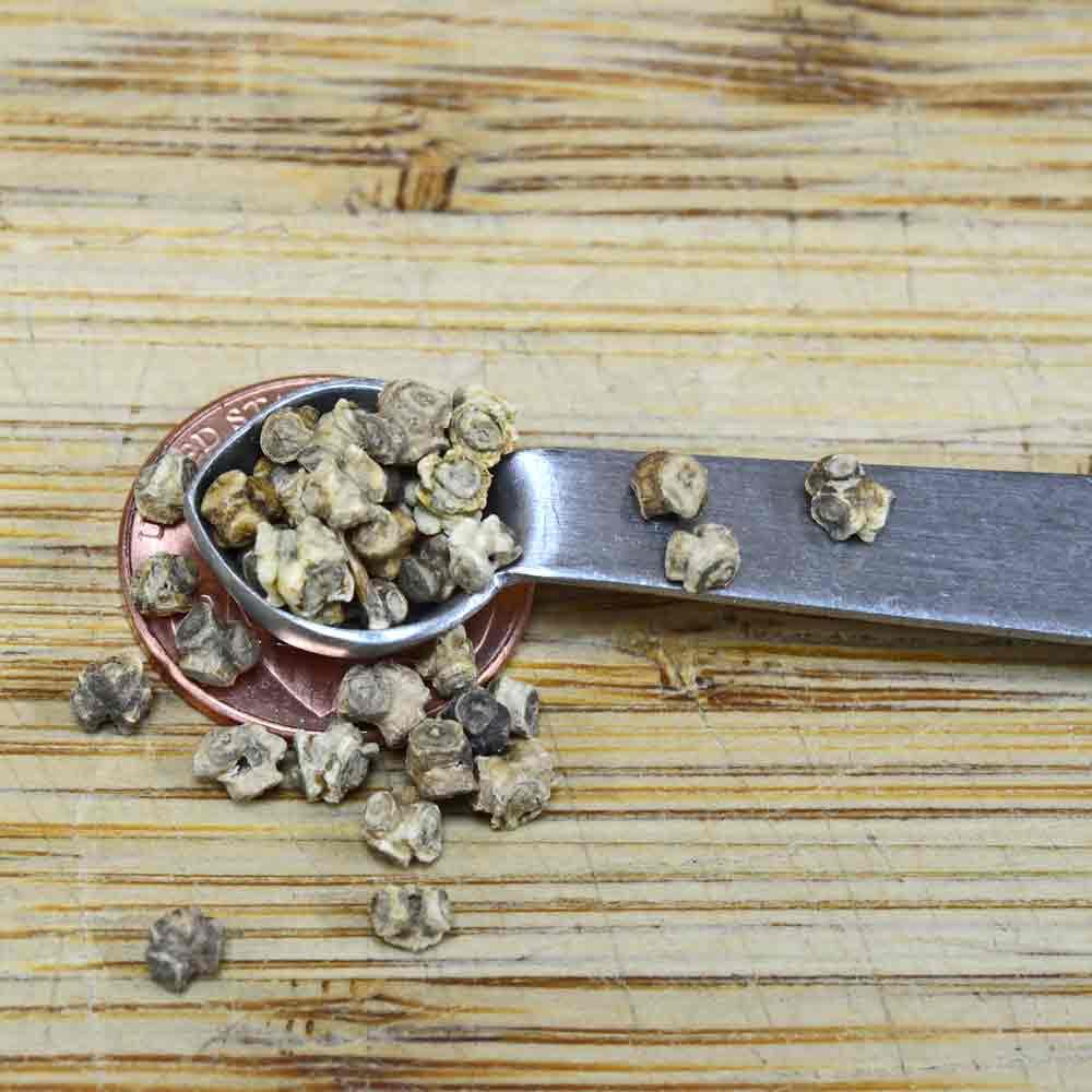 Golden Detroit Heirloom Beet Seeds - (Beta vulgaris)