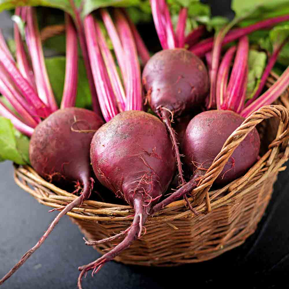 Lutz Green Leaf (Winter Keeper) Beet - (Beta vulgaris)