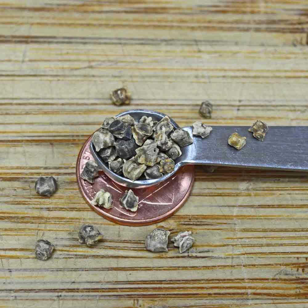 Lutz Green Leaf (Winter Keeper) Heirloom Beet Seeds - (Beta vulgaris)