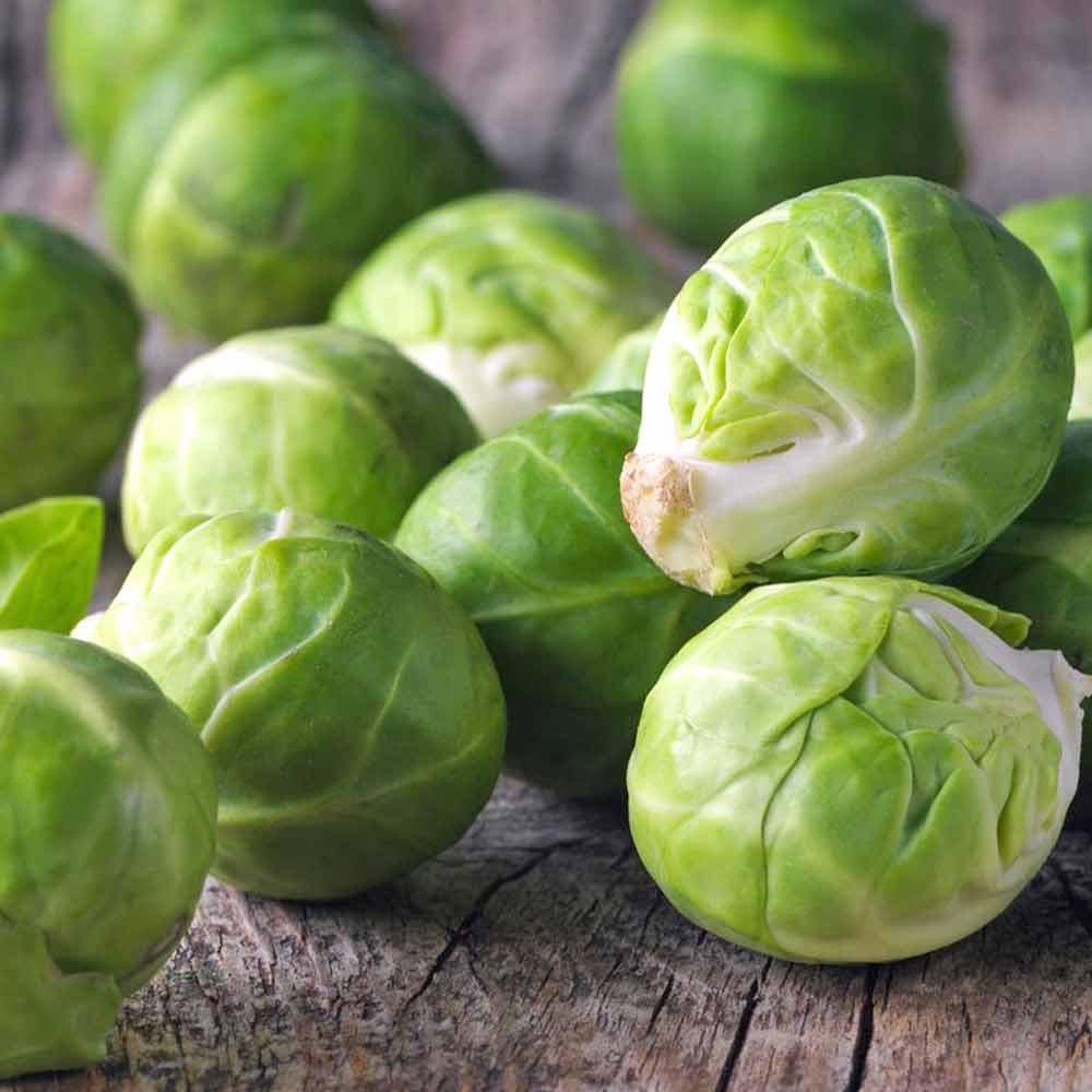 Mezzo Nano Brussels Sprout - (Brassica oleracea)
