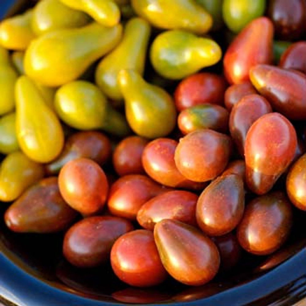 Chocolate Pear Tomato - (Lycopersicon lycopersicum)