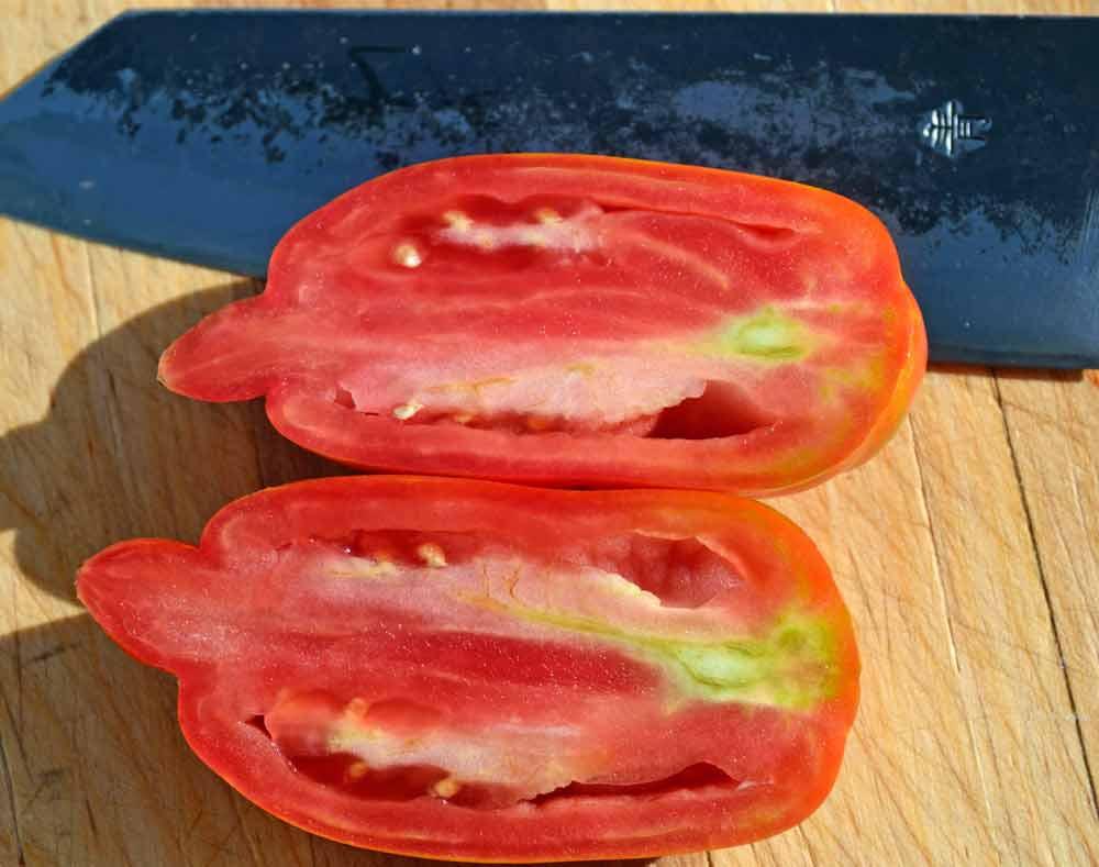 Sliced Speckled Roman Tomato  - (Lycopersicon lycopersicum)