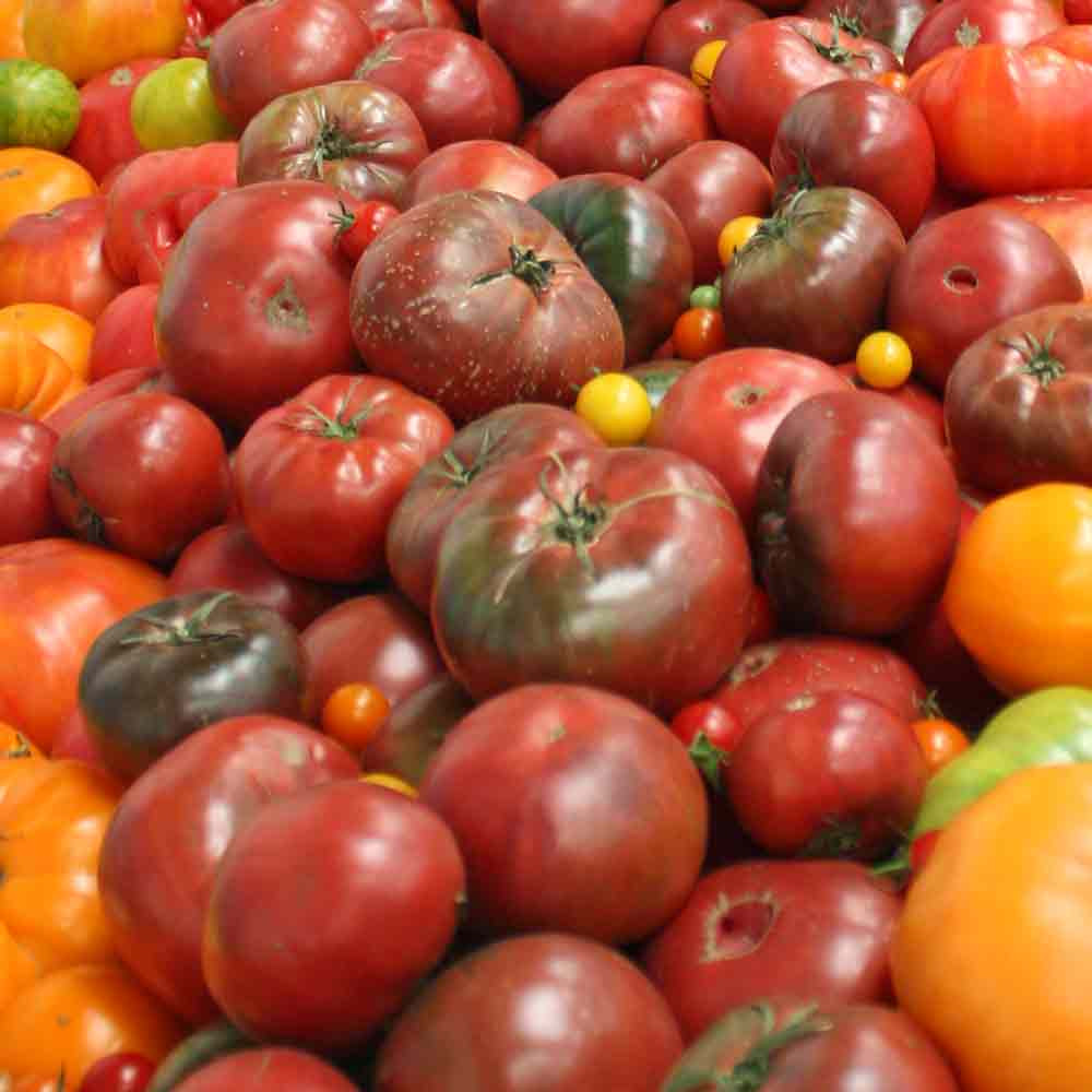 Black Krim Tomatoes at farmer's market - (Lycopersicon lycopersicum)