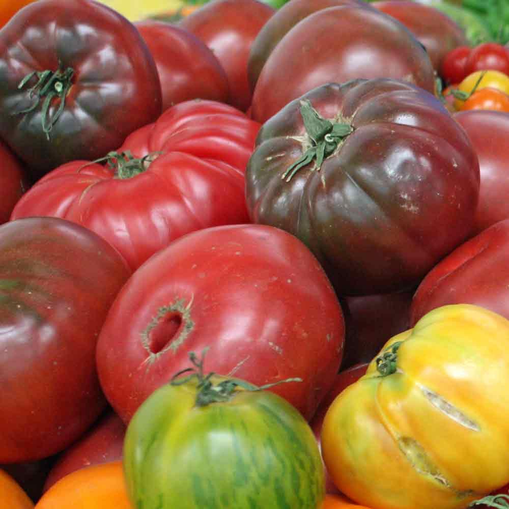 Black Krim Tomatoes at farmer's market - (Lycopersicon lycopersicum)