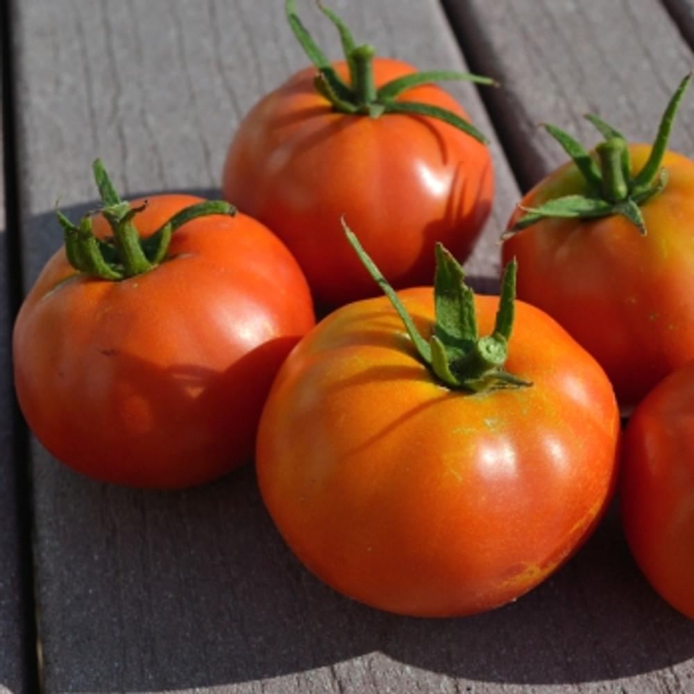 Box Car Willie Tomato - (Lycopersicon lycopersicum)
